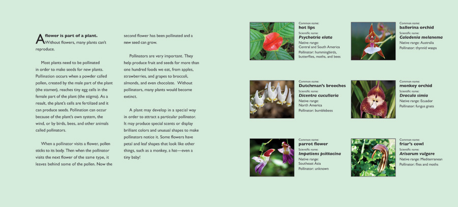 fantastic flowers info page