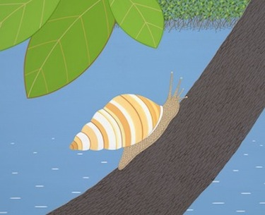 stripes florida tree snail